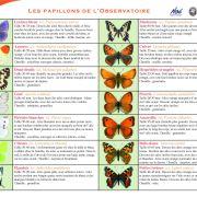 Venez découvrir le monde des papillons