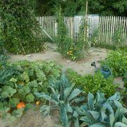 Au jardin, mieux vaut prévenir que guérir !