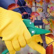 Jardinage au naturel - Préparer ses arbres pour l\'hiver