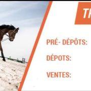 Trocathlon équitation