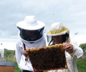 Stage d\'apiculture à Brunstatt