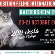 Expo Féline Internationale Raedersheim