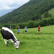 Rando trail : le Markstein