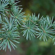 Visite-enquête : les arbres vous racontent
