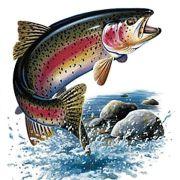 Matinée de pêche à la truite