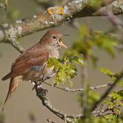 Animation nature : les chants d\'oiseaux
