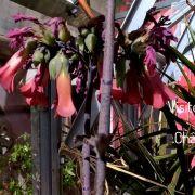 Rendez-vous au jardin - Le pouvoir des plantes, les vodou ... et nous