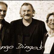 Django Dingos