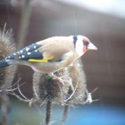 Le devenir des oiseaux