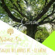 Sagesse des arbres #1 Le chêne - Bain de forêt