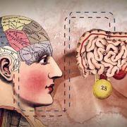 L\'intestin, ce deuxième cerveau