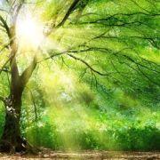 L\'intelligence des arbres