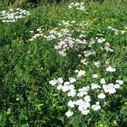 Je découvre les plantes aromatiques, cuisine ma glace et mon sirop