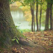 Grand jeu en famille : les aventures du chêne