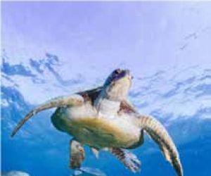 L\'odyssée des tortues
