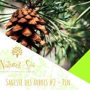 Sagesse des arbres #2 - le pin