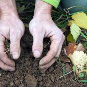Alsace Ecotourisme : Les plantes sauvages et la vigne