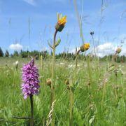Géologie, faune, flore et lecture de paysages