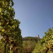 Viticulture et biodiversité