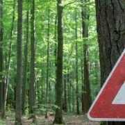 La maladie de Lyme : une autre approche