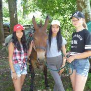 Rando'ânes – camp ado sous tente 11/15 ans