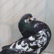 Exposition avicole à Lutterbach