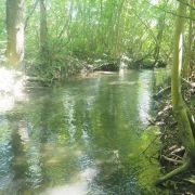 Chantier Nature : entretien de la Ripisylve du Sauerbrunnen