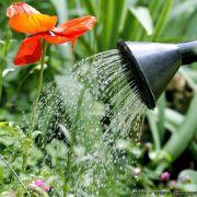 La gestion de l\'eau au jardin