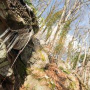 Remarqu\'arbres - Exposition photographique
