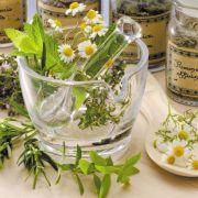 A la découverte des plantes utiles...
