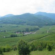 Chantier Nature : Entretien des pelouses sèches du Grasberg