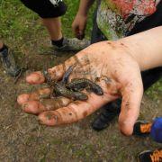 Amphibiens et reptiles d'Alsace