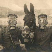 Les animaux dans la guerre : Le point de vue animal