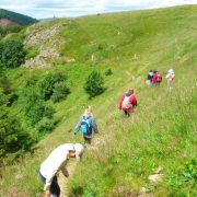 Hommes et Vosges, de la forêt d'argent aux chaumes du Molkenrain
