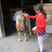Après midi découverte des poneys dans leur milieu naturel