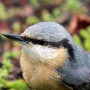 A la découverte des oiseaux du Neuland