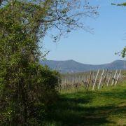 Chantier Nature : entretien et taille de haies champêtres de l\'Immerschenberg