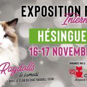 Exposition Féline Internationale Hésingue