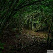 « Der Wald / la forêt »