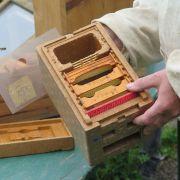 L'apiculture en Alsace du XXe siècle à nos jours