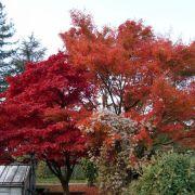 Animations de l'automne du Jardin botanique de l\'Université de Strasbourg