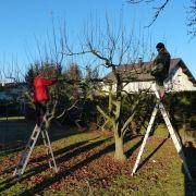 Démonstration de taille d\'hiver d\'arbres fruitiers