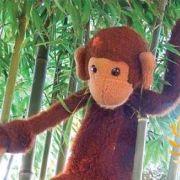 Accueil petite enfance - Les aventures de Coco