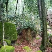 Se ressourcer en forêt avec les balades connectées