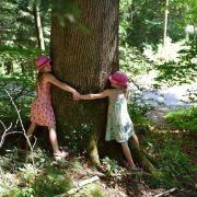 À la découverte des bienfaits des arbres et de l\'énergie de la nature