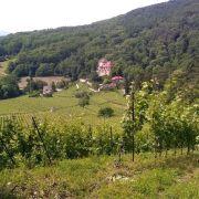 Dégustation vins et fromage au Château