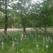 Chantier d'entretien de la forêt du Rothleible
