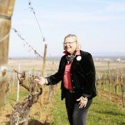 Alsace Ecotourisme : Le vignoble aux 5 sens