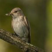 A la recherche des oiseaux du village