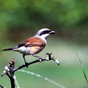 Oiseaux du Bastberg